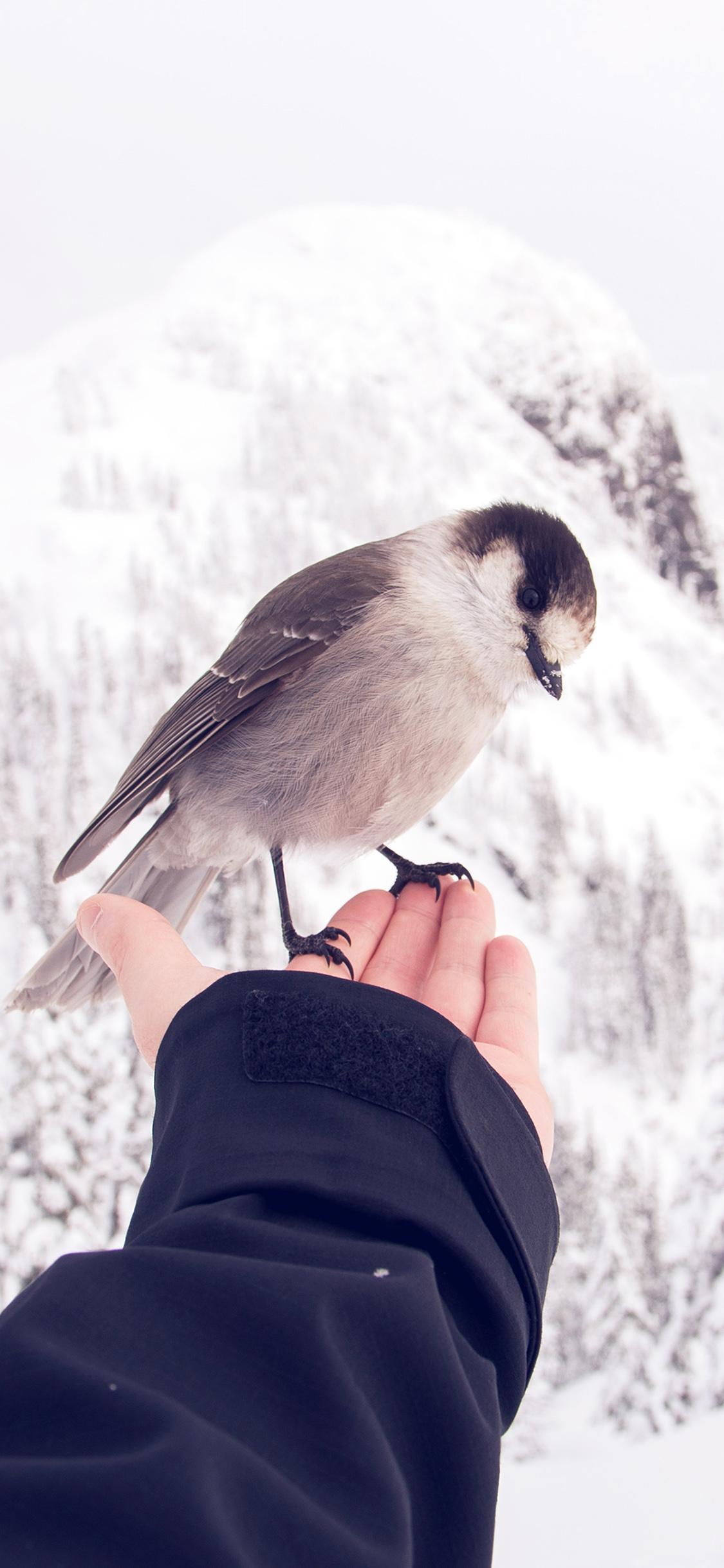 iPhoneXpapers.com-Apple-iPhone-wallpaper-nb92-bird-in-my-hand-snow-winter-cold-animal
