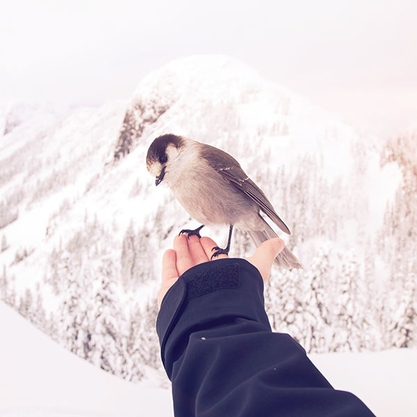 iPapers.co-Apple-iPhone-iPad-Macbook-iMac-wallpaper-nb93-bird-in-my-hand-snow-winter-cold-animal-flare-wallpaper