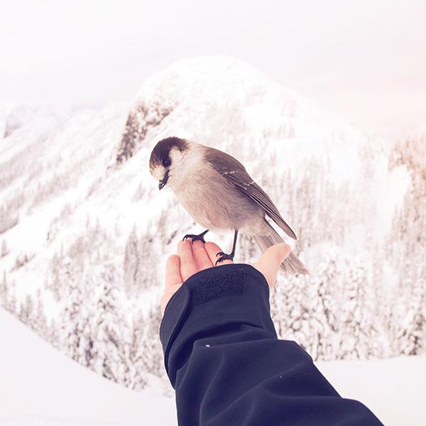 iPapers.co-Apple-iPhone-iPad-Macbook-iMac-wallpaper-nb93-bird-in-my-hand-snow-winter-cold-animal-flare-wallpaper
