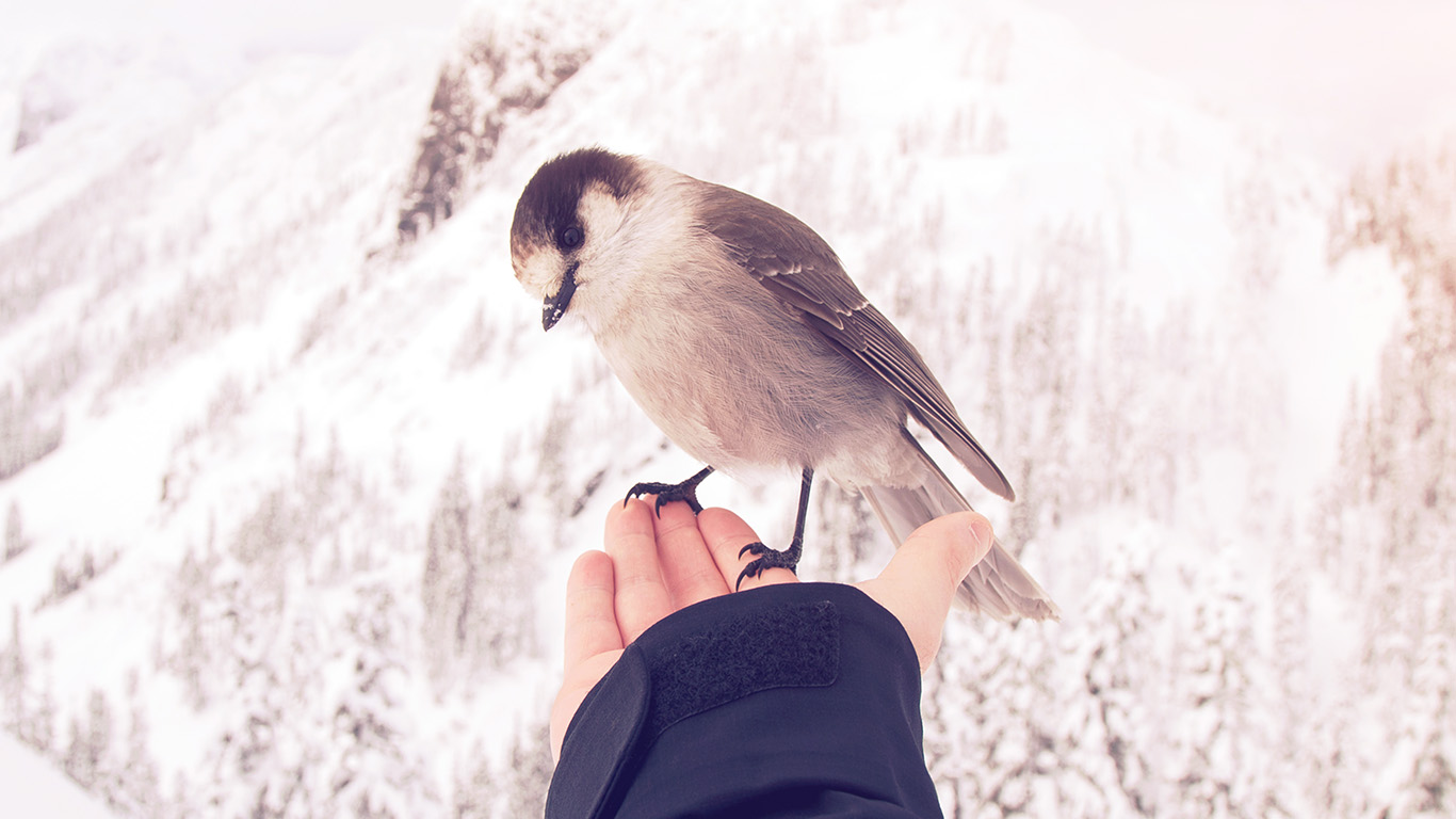 desktop-wallpaper-laptop-mac-macbook-air-nb93-bird-in-my-hand-snow-winter-cold-animal-flare-wallpaper