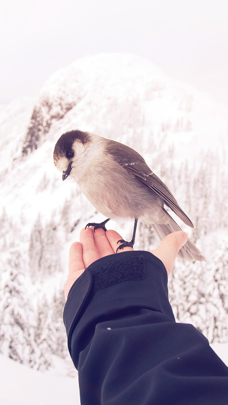 iPhone7papers.com-Apple-iPhone7-iphone7plus-wallpaper-nb93-bird-in-my-hand-snow-winter-cold-animal-flare