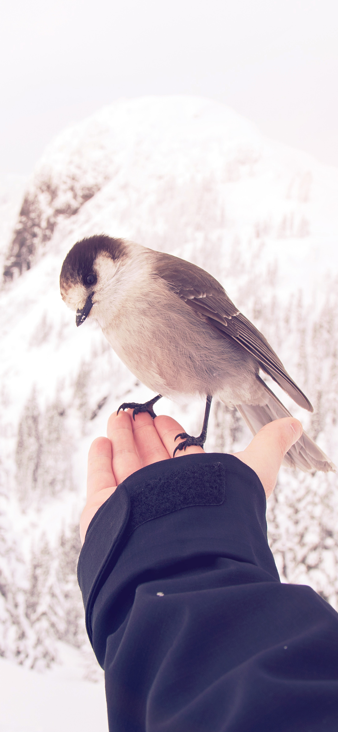 iPhoneXpapers.com-Apple-iPhone-wallpaper-nb93-bird-in-my-hand-snow-winter-cold-animal-flare