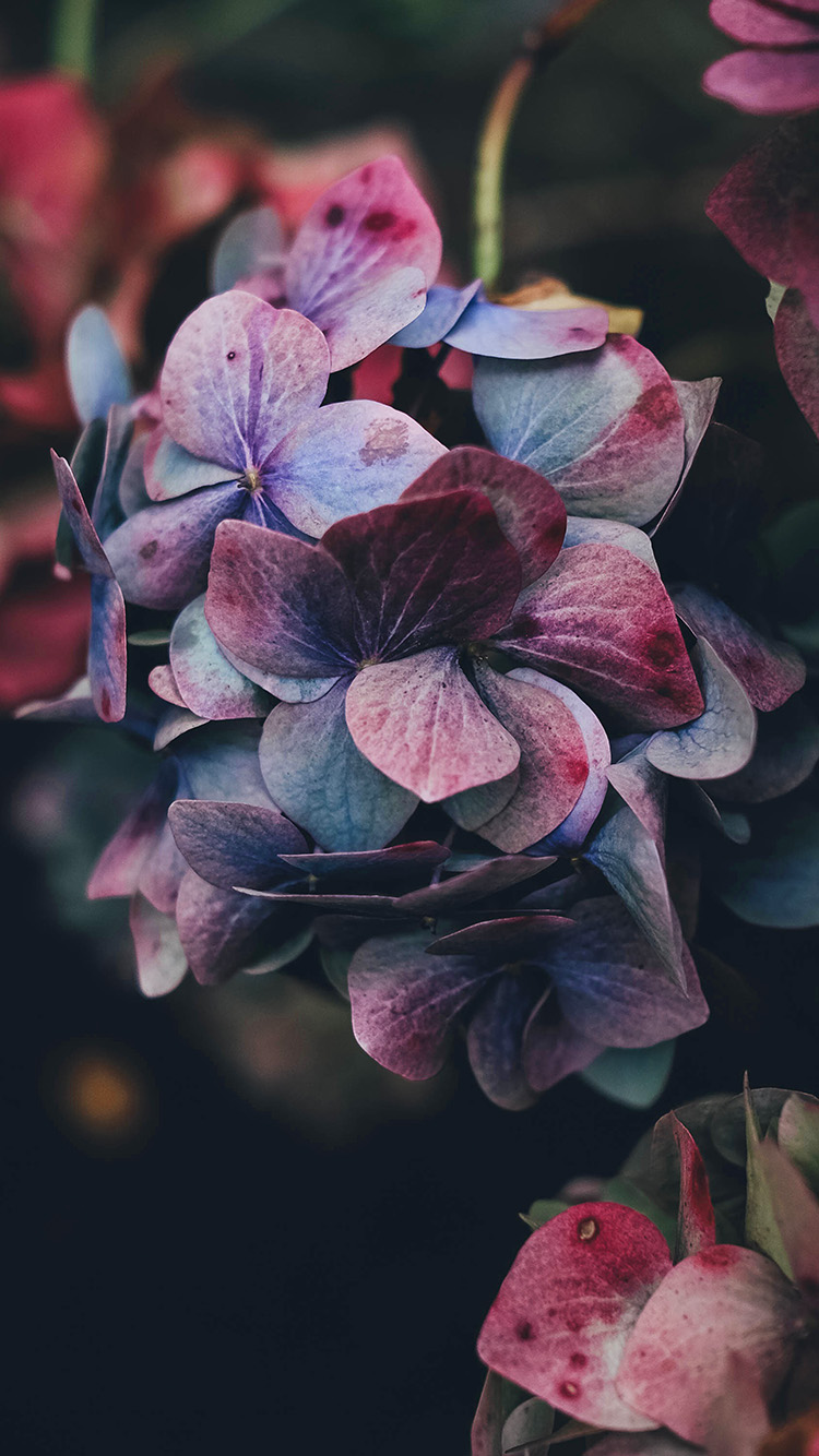 iPhone6papers.co-Apple-iPhone-6-iphone6-plus-wallpaper-nb94-flower-rainbow-color-dark