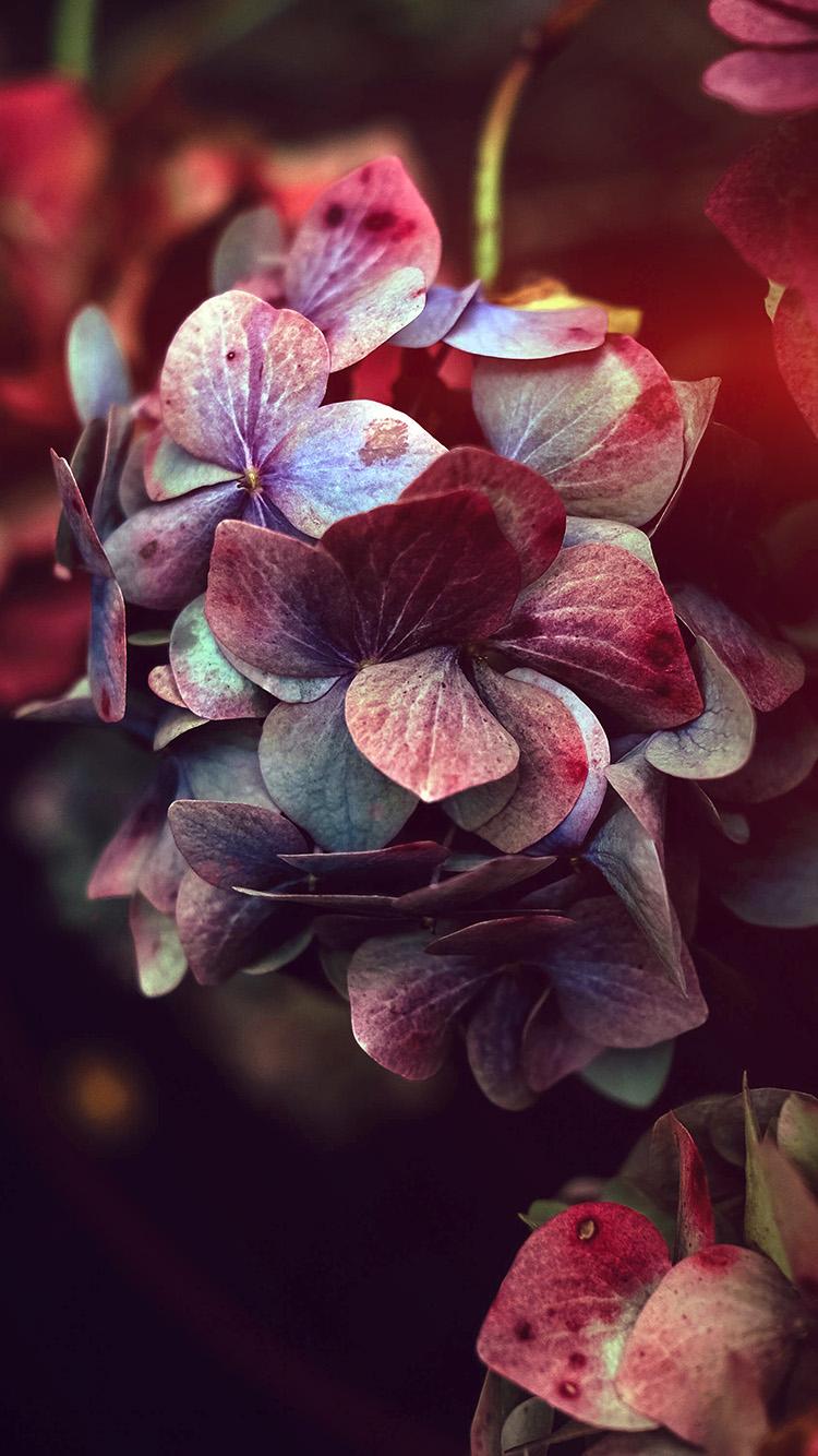 iPhonepapers.com-Apple-iPhone-wallpaper-nb95-flower-rainbow-color-dark-flare
