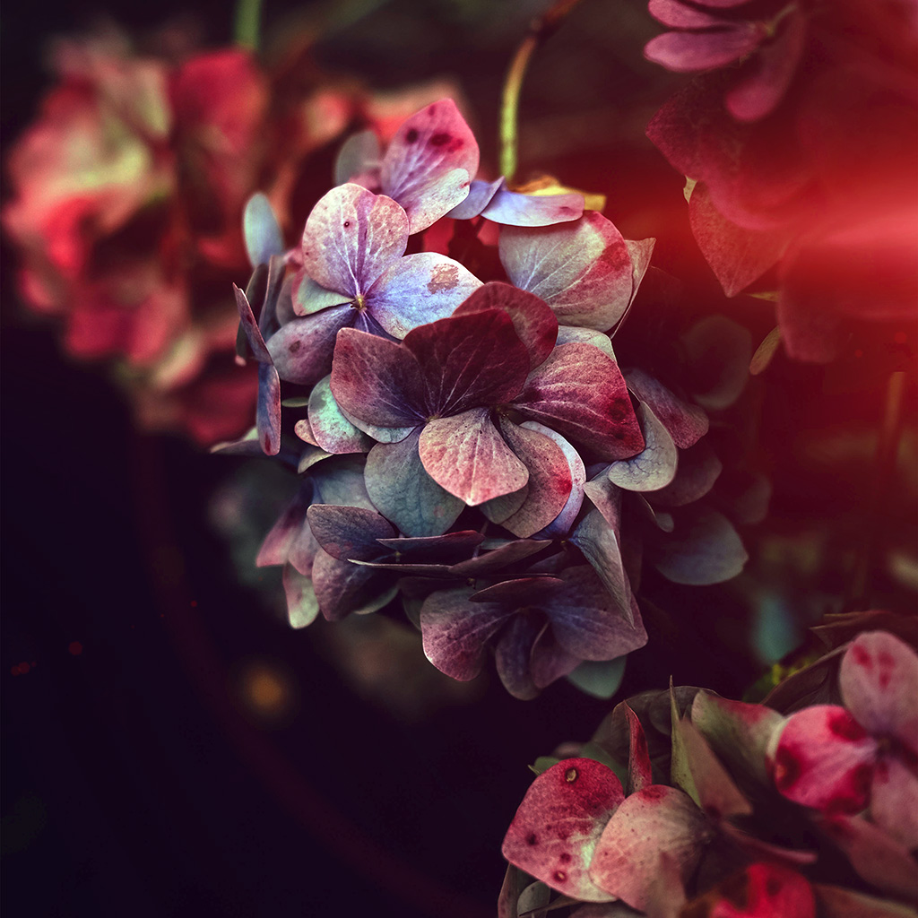 wallpaper-nb95-flower-rainbow-color-dark-flare-wallpaper