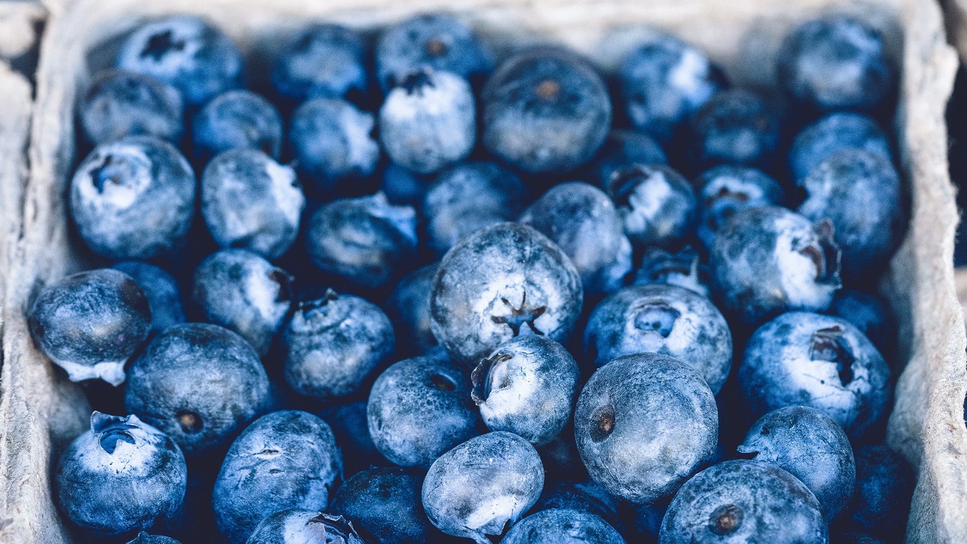 blueberry essay Apfi english literature 1999 scoring guidelines  the score you assign should reflect your judgment of the quality of the essay as a whole.