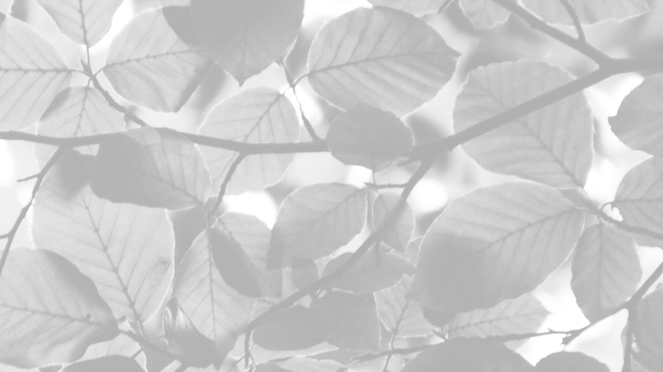 desktop-wallpaper-laptop-mac-macbook-air-nc25-tree-blossom-nature-leaf-green-white-bw-wallpaper
