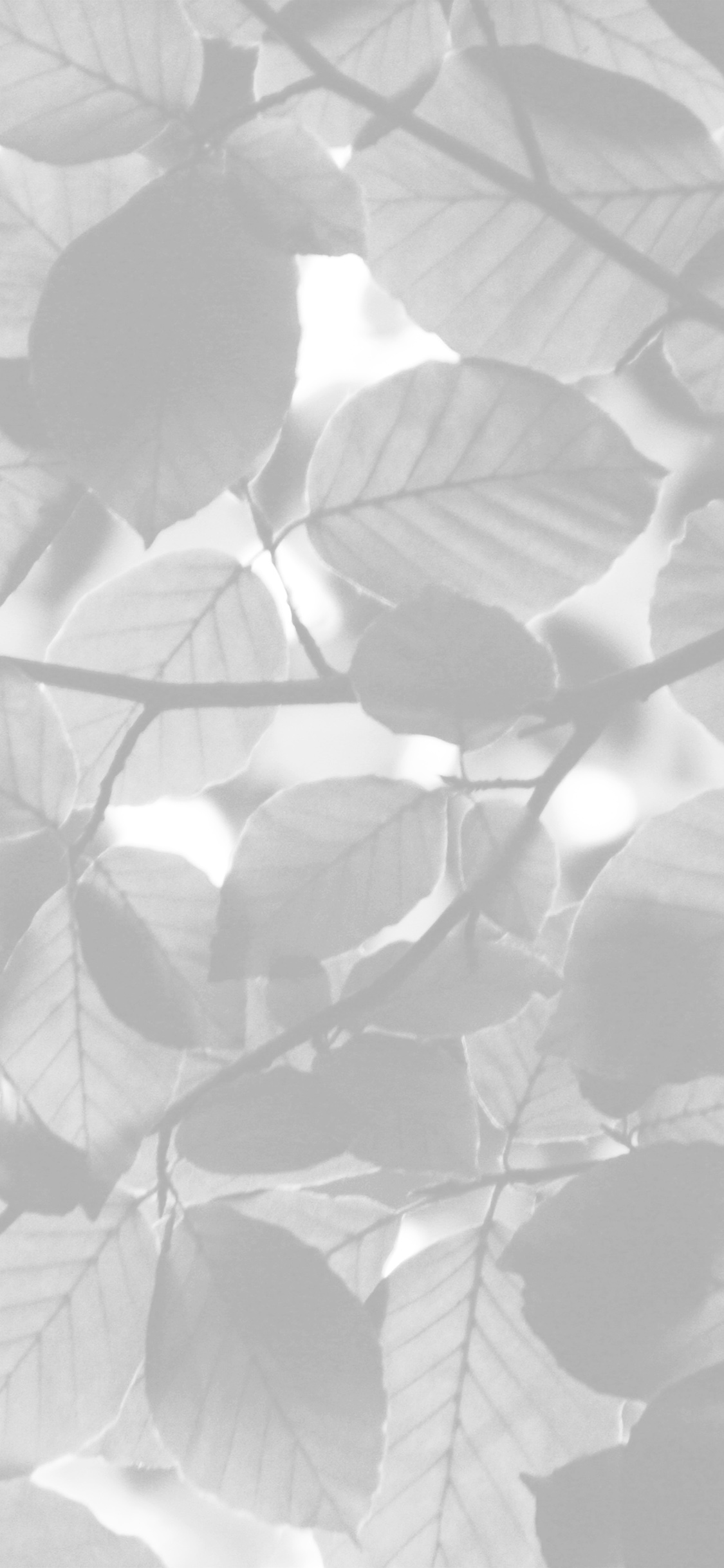 iPhoneXpapers.com-Apple-iPhone-wallpaper-nc25-tree-blossom-nature-leaf-green-white-bw