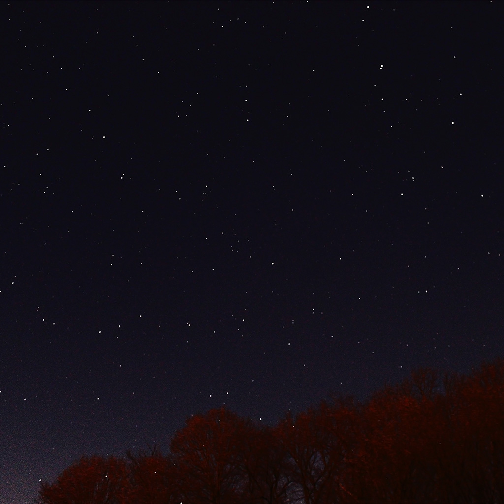 wallpaper-nc26-night-sky-dark-star-lights-tree-nature-wallpaper