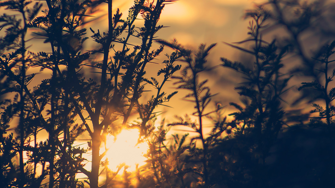 desktop-wallpaper-laptop-mac-macbook-air-nc29-sunset-tree-light-flare-bokeh-nature-photo-wallpaper