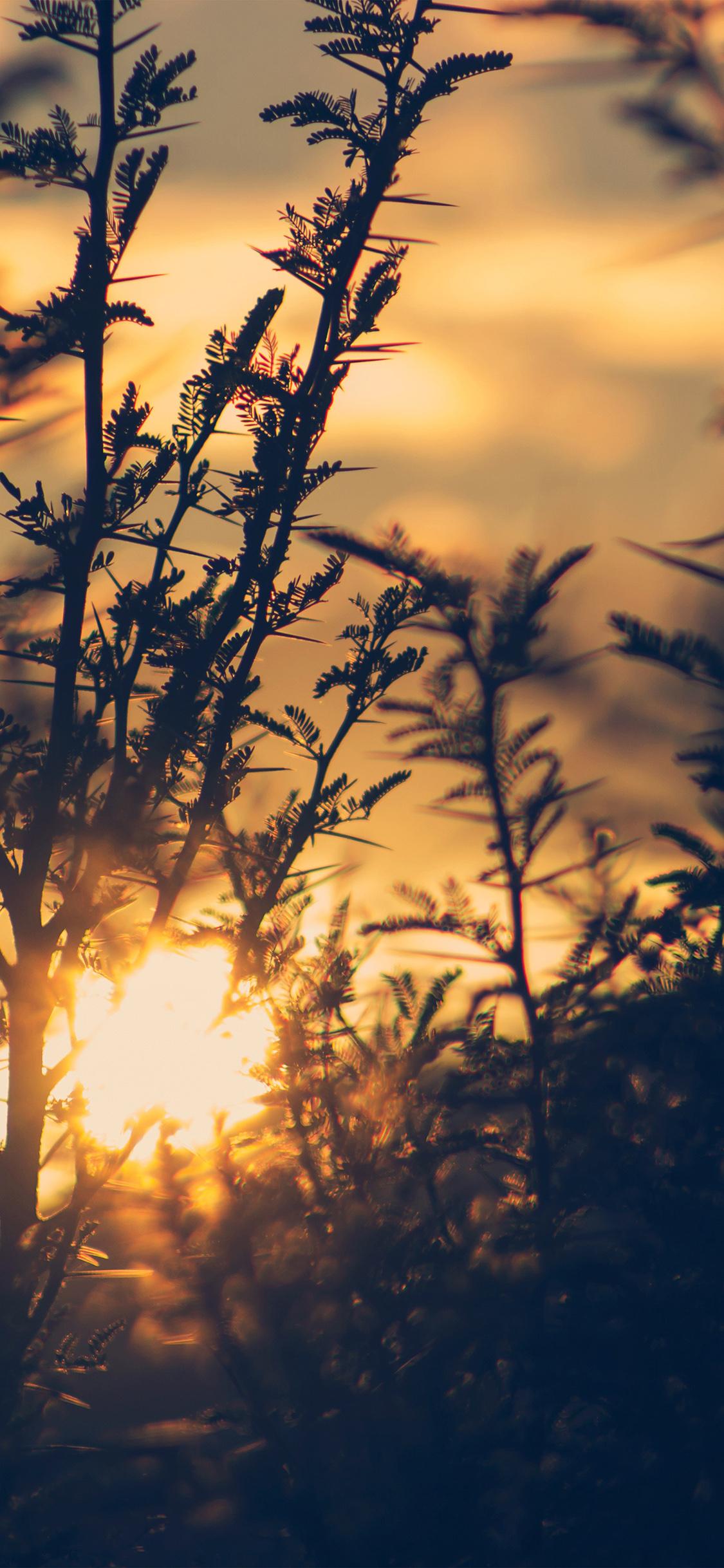iPhoneXpapers.com-Apple-iPhone-wallpaper-nc29-sunset-tree-light-flare-bokeh-nature-photo
