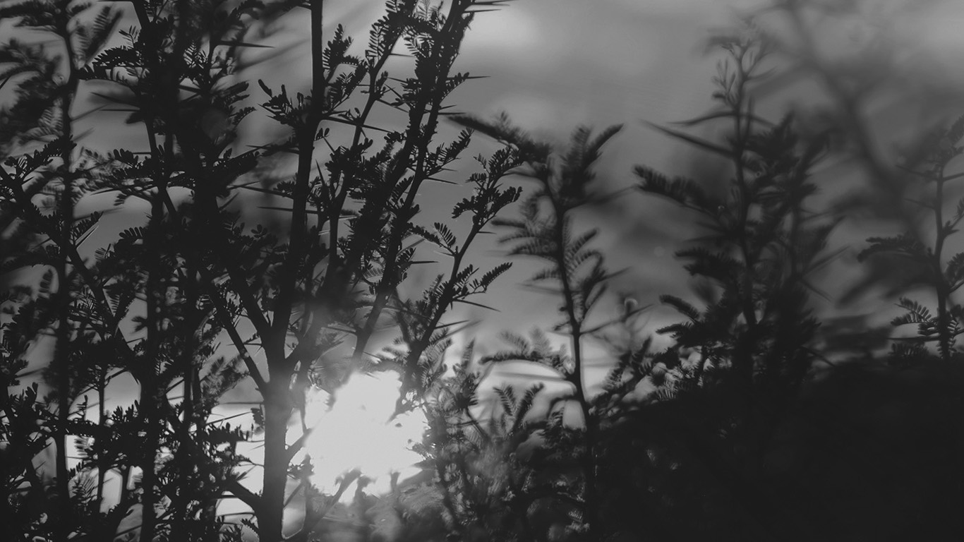 desktop-wallpaper-laptop-mac-macbook-air-nc31-sunset-tree-light-flare-bokeh-nature-photo-dark-bw-wallpaper
