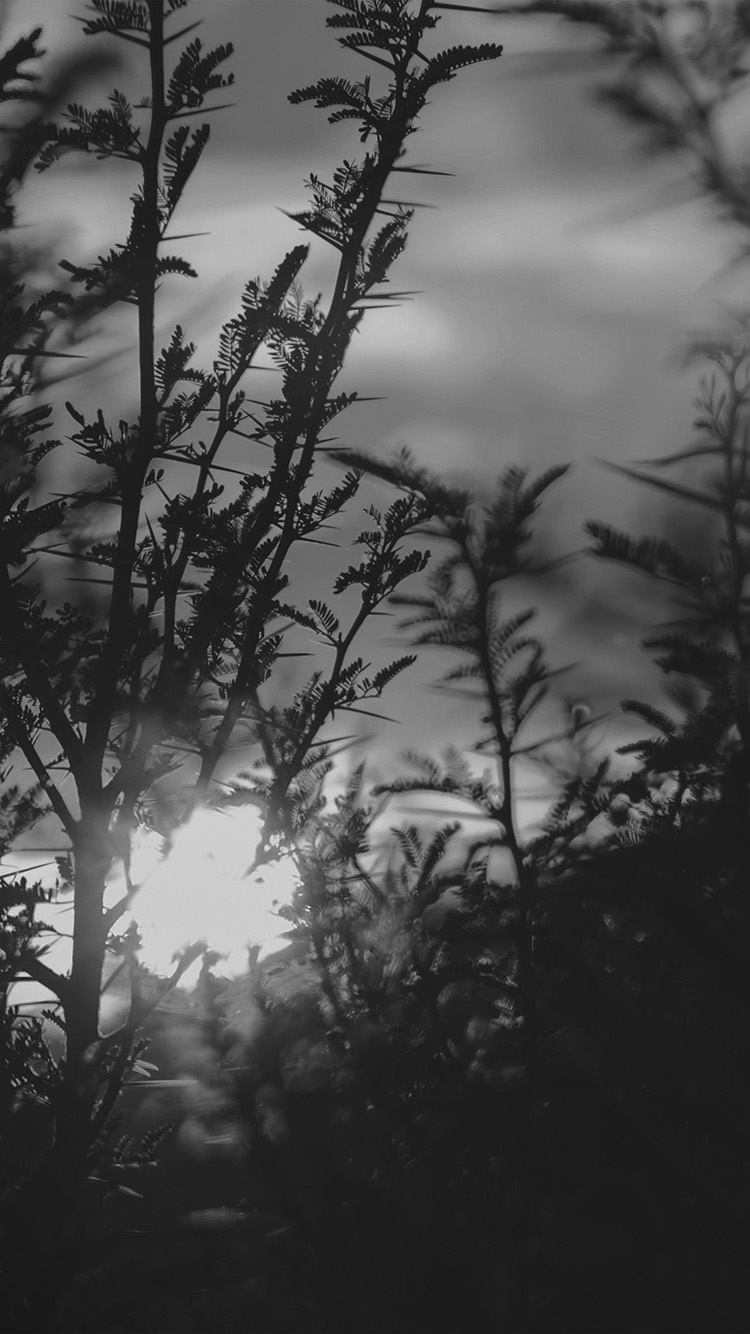 iPhone7papers.com-Apple-iPhone7-iphone7plus-wallpaper-nc31-sunset-tree-light-flare-bokeh-nature-photo-dark-bw