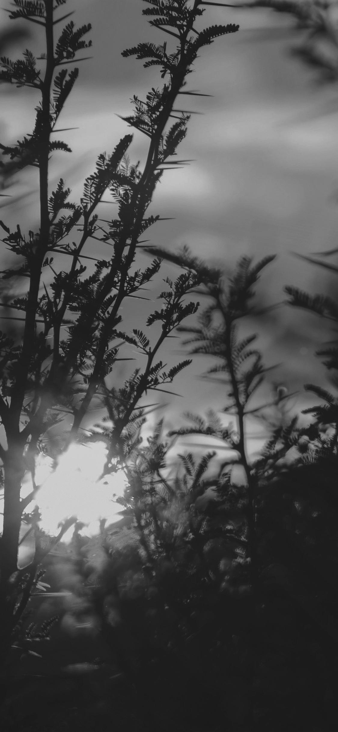 iPhoneXpapers.com-Apple-iPhone-wallpaper-nc31-sunset-tree-light-flare-bokeh-nature-photo-dark-bw