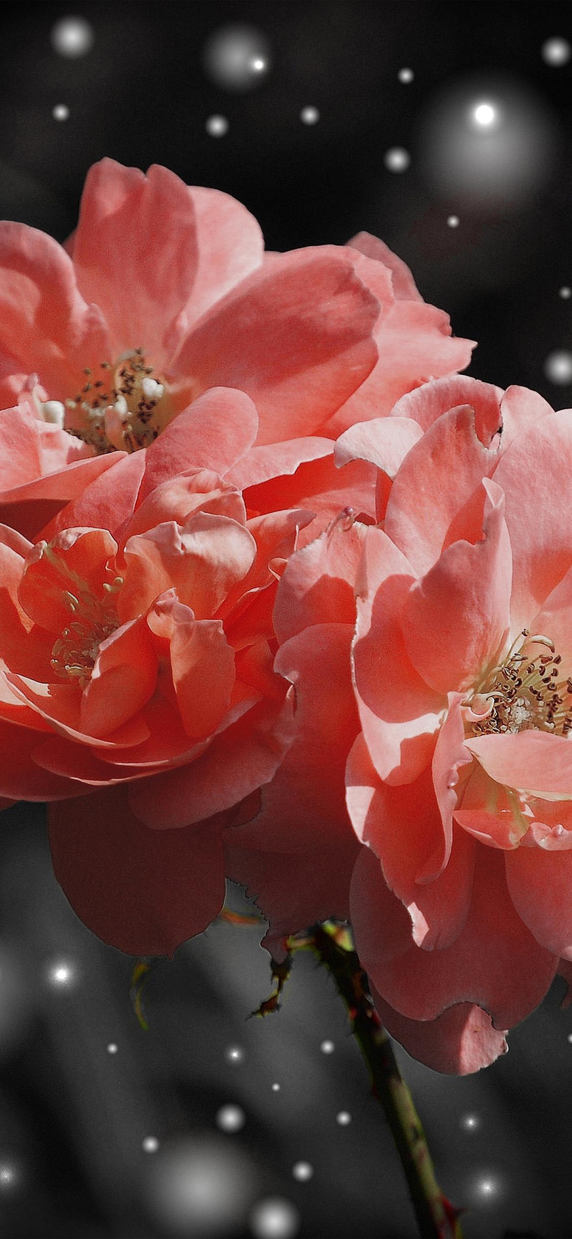iPhoneXpapers.com-Apple-iPhone-wallpaper-nc37-flower-pink-snow-nature-art