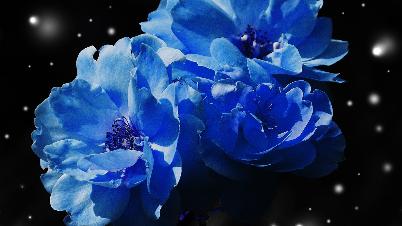 desktop-wallpaper-laptop-mac-macbook-air-nc40-flower-blue-snow-nature-art-wallpaper