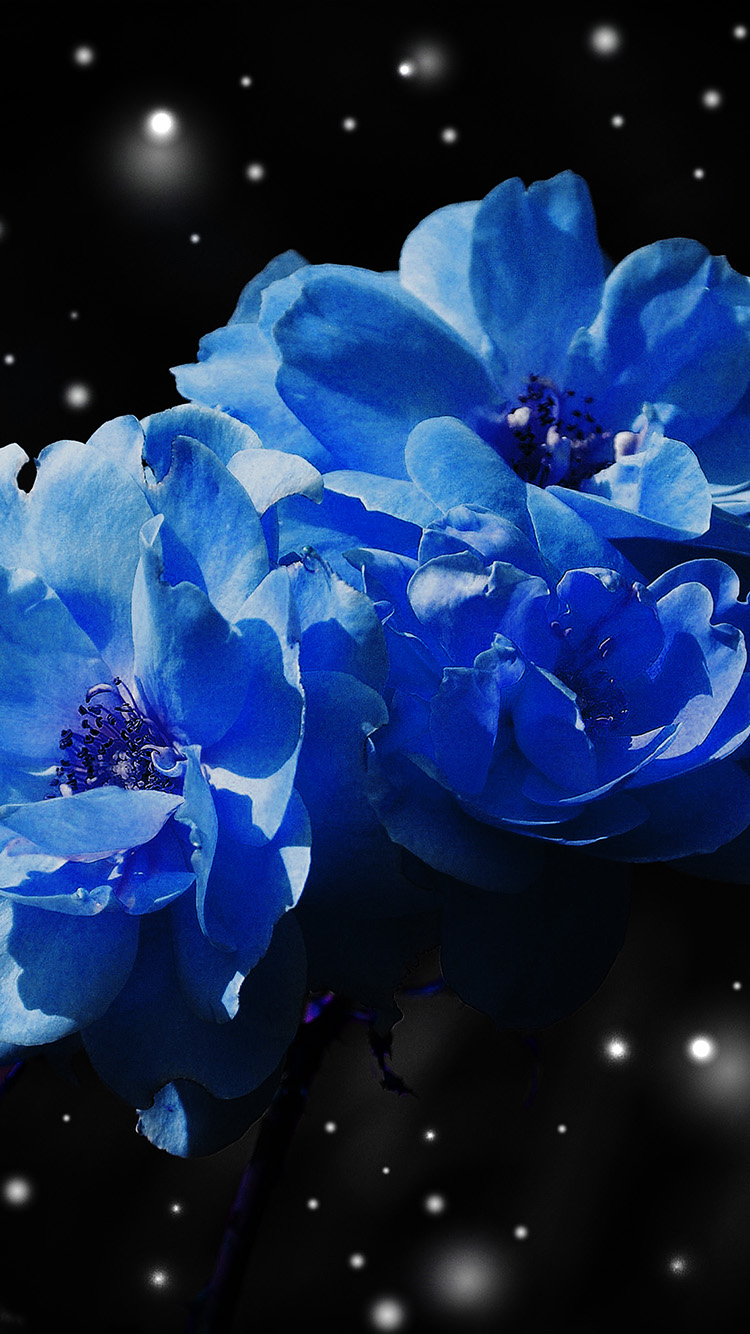 iPhone6papers.co-Apple-iPhone-6-iphone6-plus-wallpaper-nc40-flower-blue-snow-nature-art
