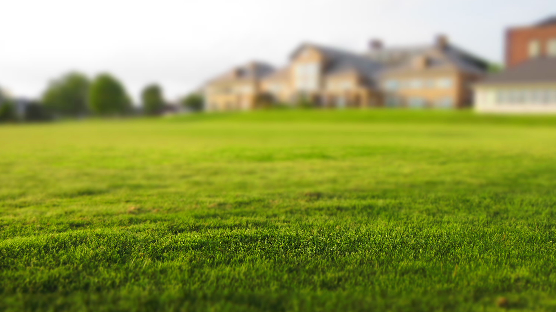 Our obsession with green lawns drives me nuts, and it's killing the environment