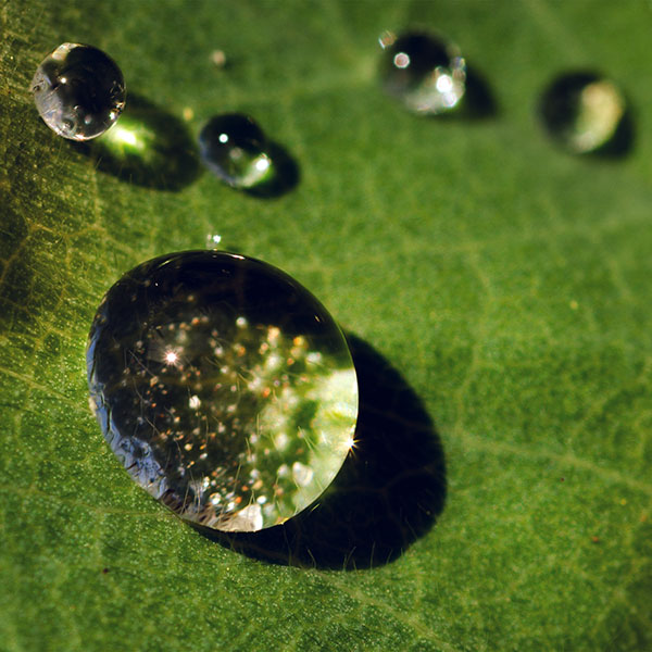 iPapers.co-Apple-iPhone-iPad-Macbook-iMac-wallpaper-nc70-nature-green-leaf-rain-drop-wallpaper