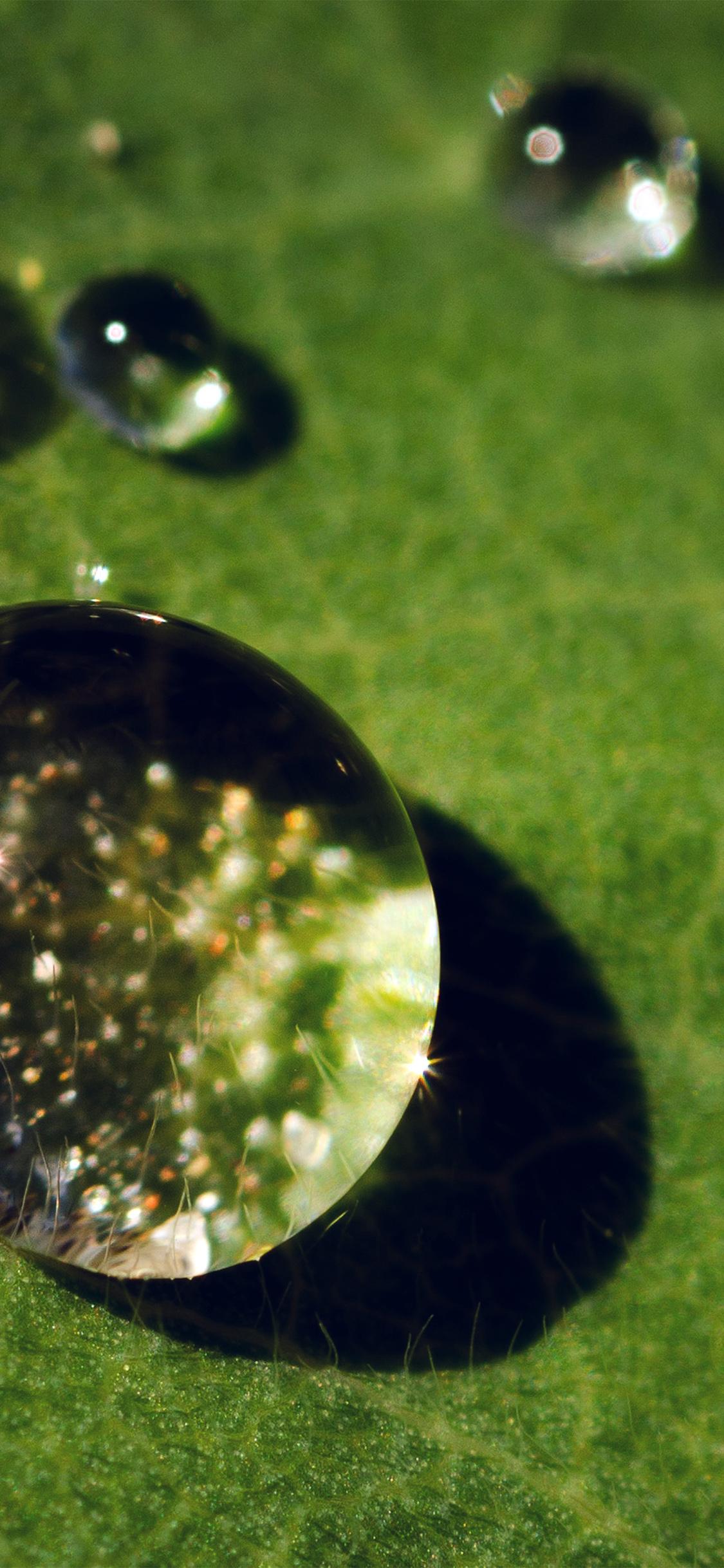 iPhoneXpapers.com-Apple-iPhone-wallpaper-nc70-nature-green-leaf-rain-drop