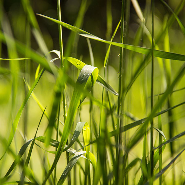 iPapers.co-Apple-iPhone-iPad-Macbook-iMac-wallpaper-nc71-grass-lawn-flower-green-leaf-rain-wallpaper