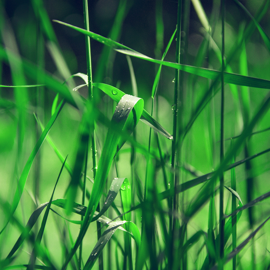 wallpaper-nc72-grass-lawn-flower-green-blue-leaf-rain-wallpaper