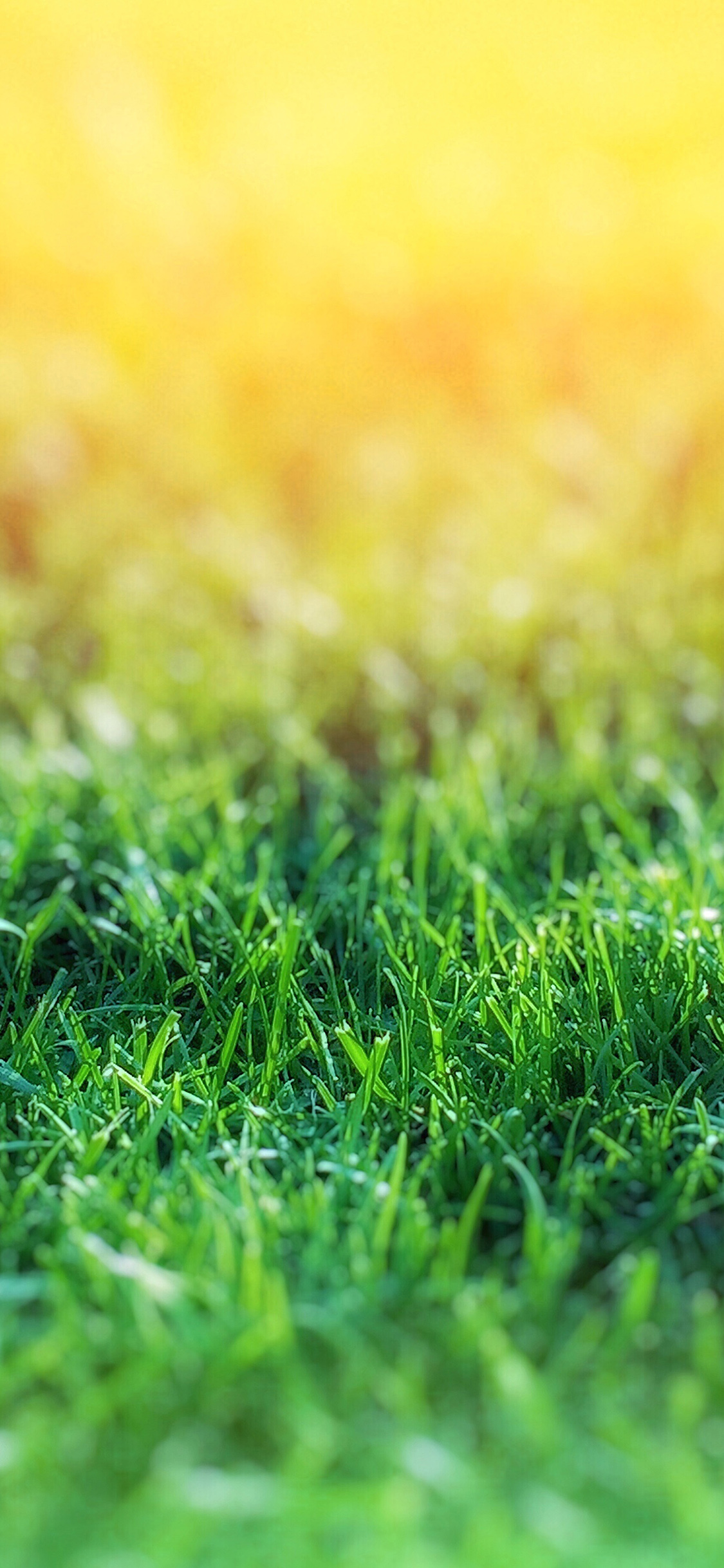 iPhoneXpapers.com-Apple-iPhone-wallpaper-nd15-lawn-flower-green-bokeh-nature