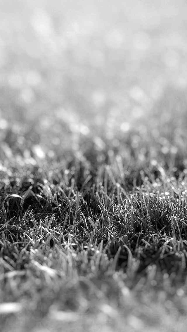 freeios8.com-iphone-4-5-6-plus-ipad-ios8-nd17-lawn-flower-dark-bw-bokeh-nature