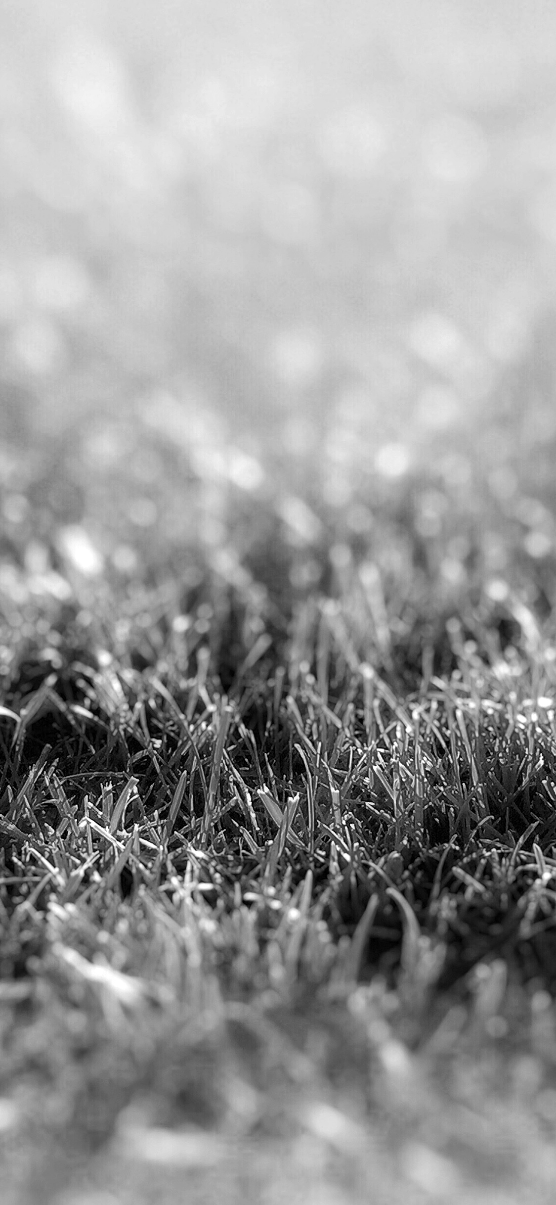 iPhoneXpapers.com-Apple-iPhone-wallpaper-nd17-lawn-flower-dark-bw-bokeh-nature
