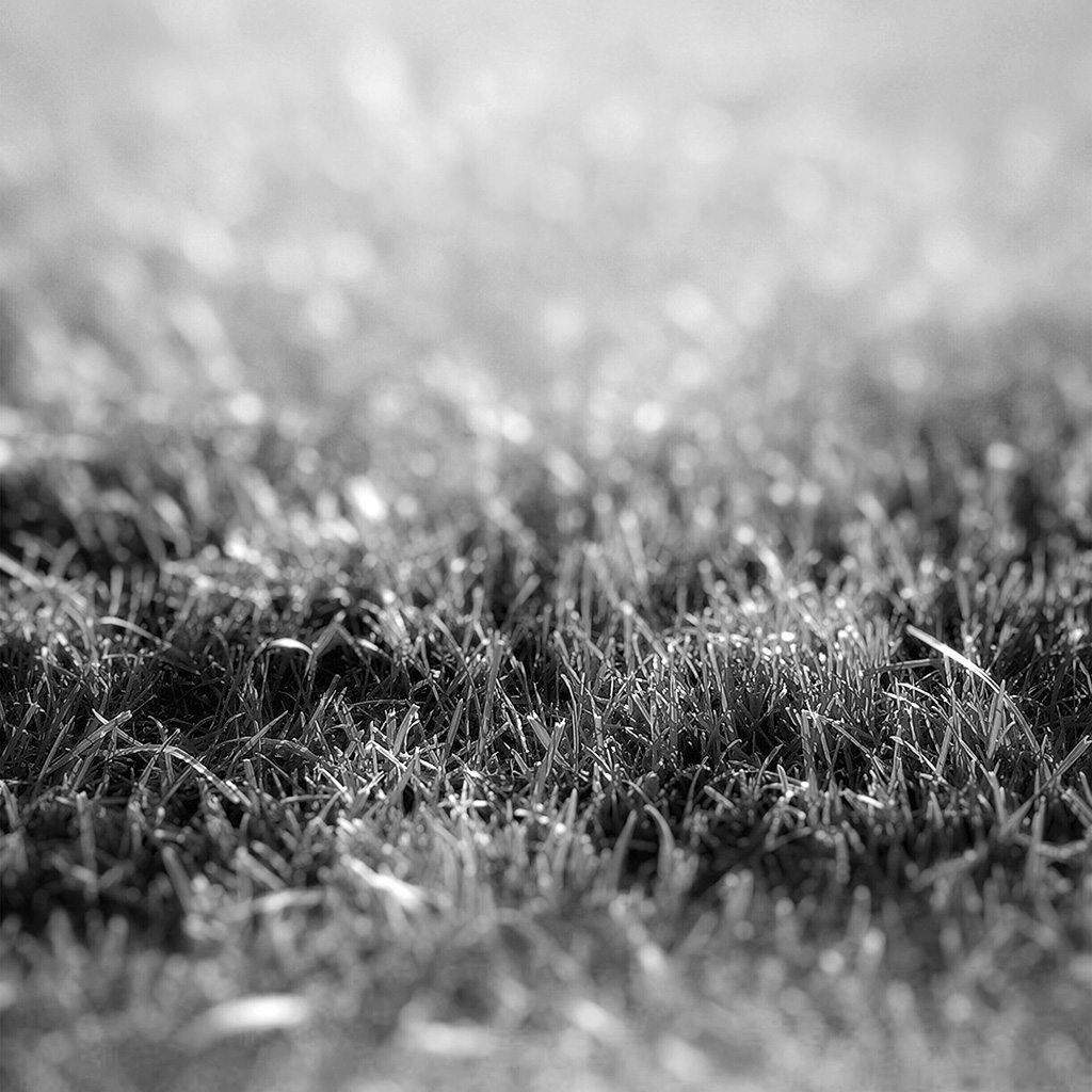 wallpaper-nd17-lawn-flower-dark-bw-bokeh-nature-wallpaper