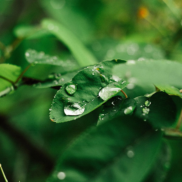iPapers.co-Apple-iPhone-iPad-Macbook-iMac-wallpaper-nd37-leaf-rain-green-nature-forest-wallpaper