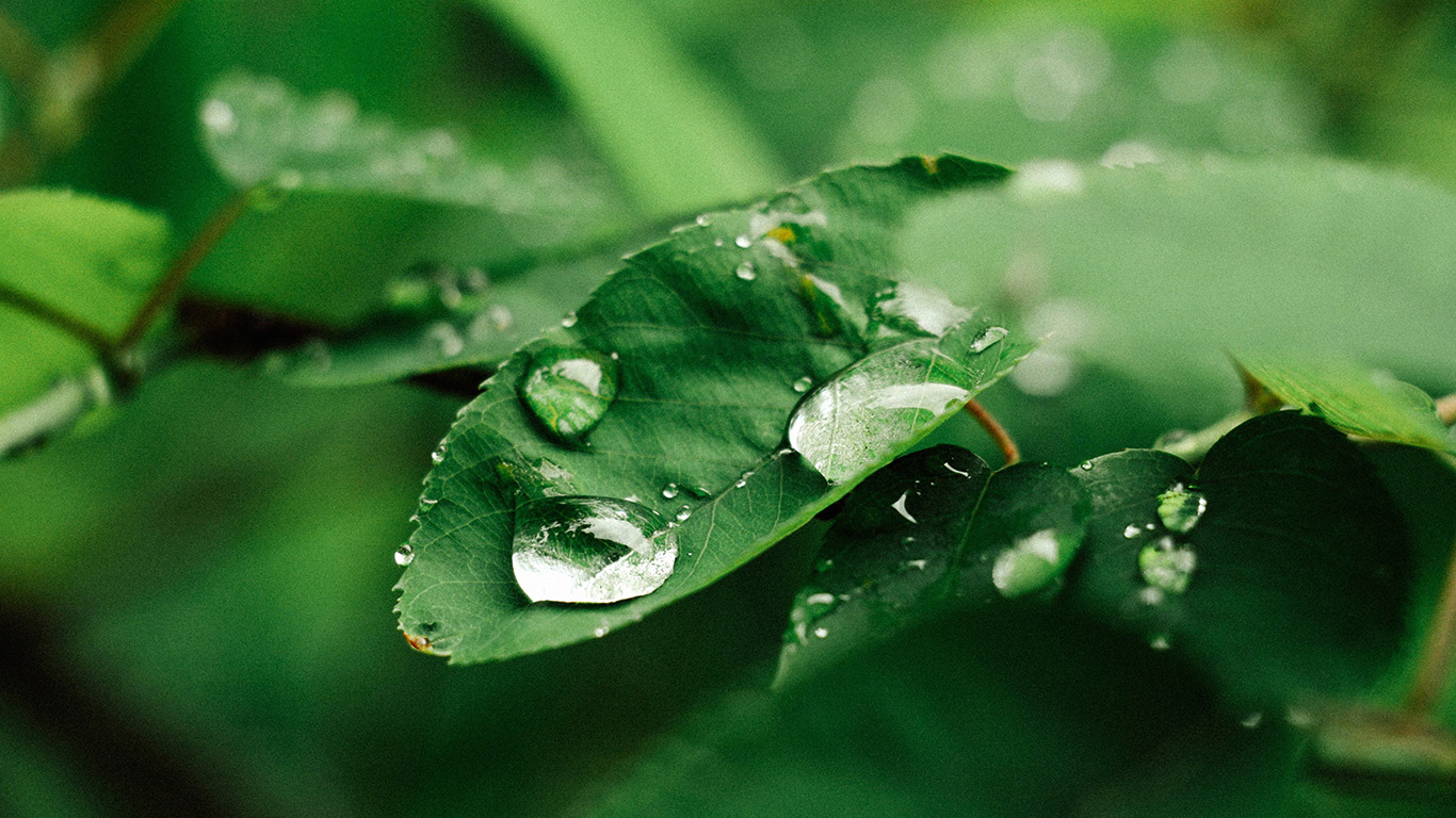 desktop-wallpaper-laptop-mac-macbook-air-nd37-leaf-rain-green-nature-forest-wallpaper