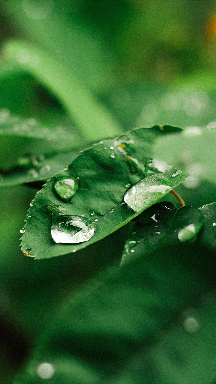iPhone6papers.co-Apple-iPhone-6-iphone6-plus-wallpaper-nd37-leaf-rain-green-nature-forest