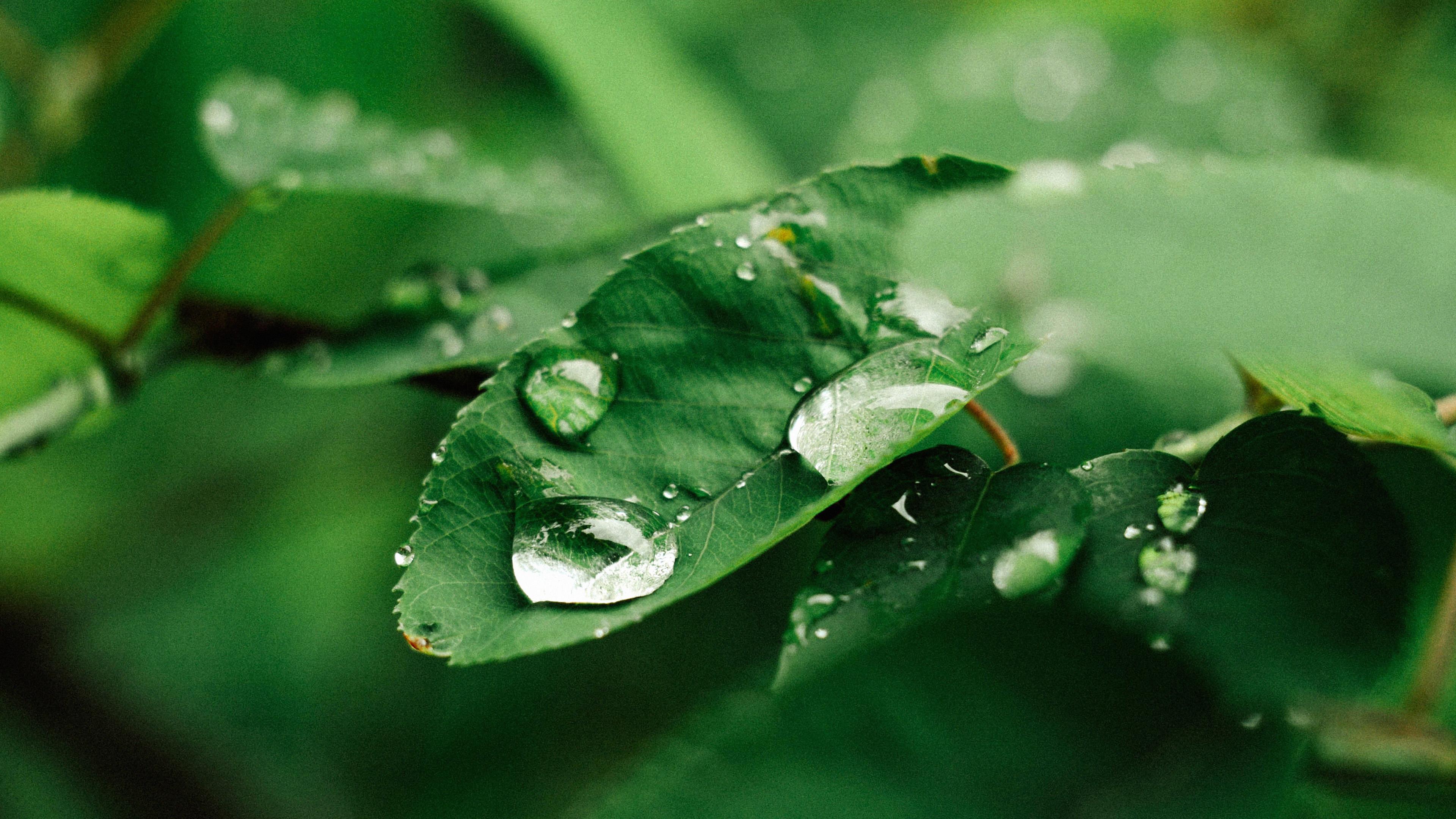 3840 x 2400 - Rainy nature hd wallpaper ...