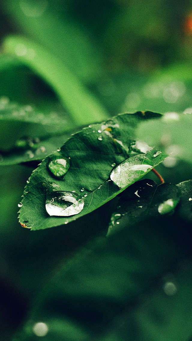 freeios8.com-iphone-4-5-6-plus-ipad-ios8-nd38-leaf-rain-green-nature-forest-blue