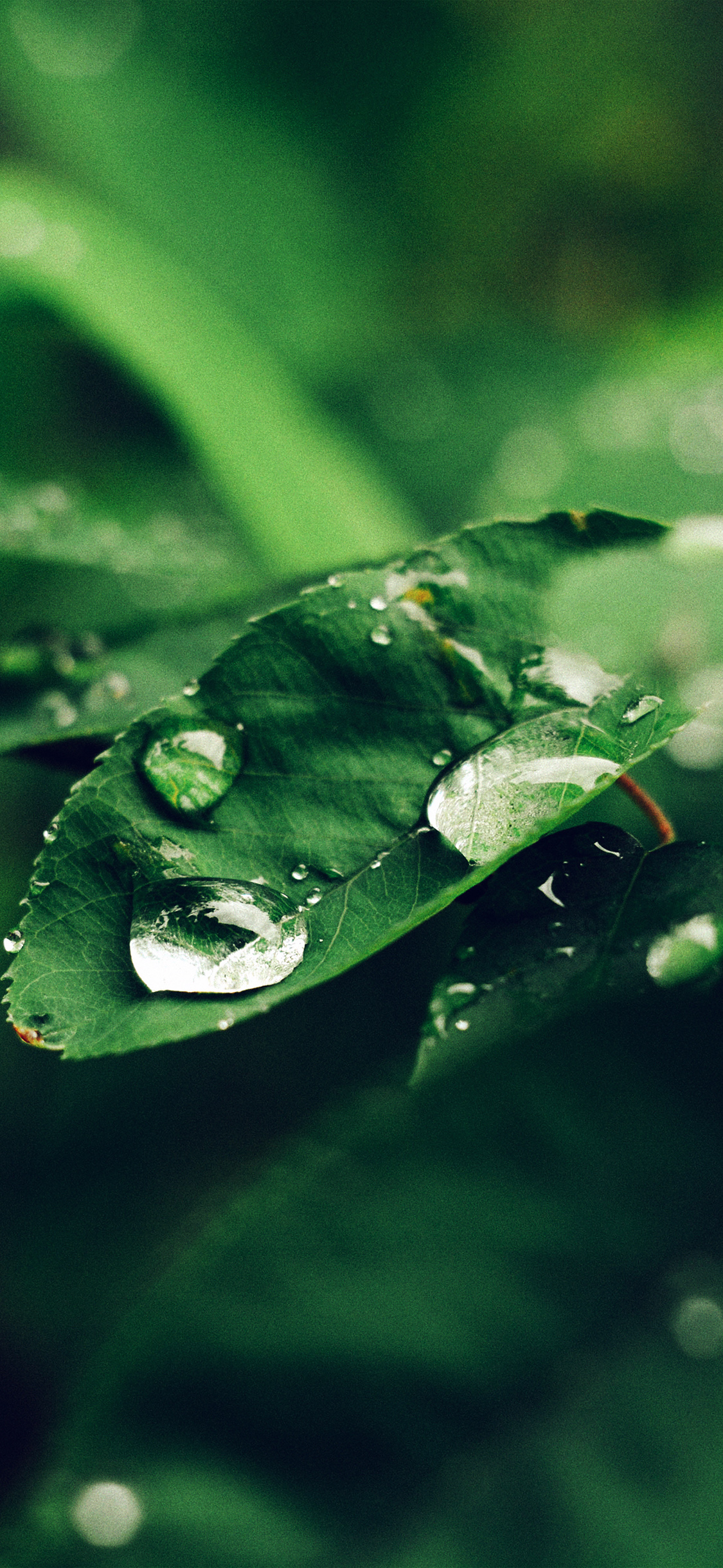 Iphonepapers Com Iphone 8 Wallpaper Nd38 Leaf Rain Green Nature