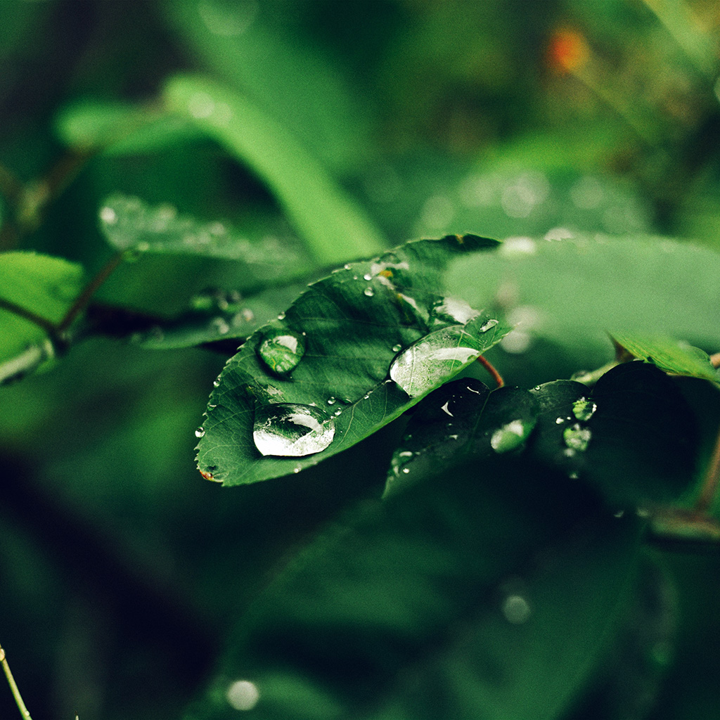 android-wallpaper-nd38-leaf-rain-green-nature-forest-blue-wallpaper