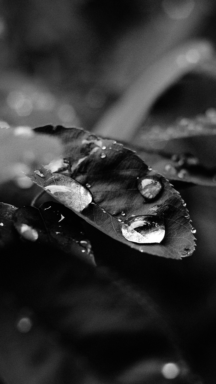 iPhone7papers.com-Apple-iPhone7-iphone7plus-wallpaper-nd39-leaf-rain-green-nature-forest-bw-dark