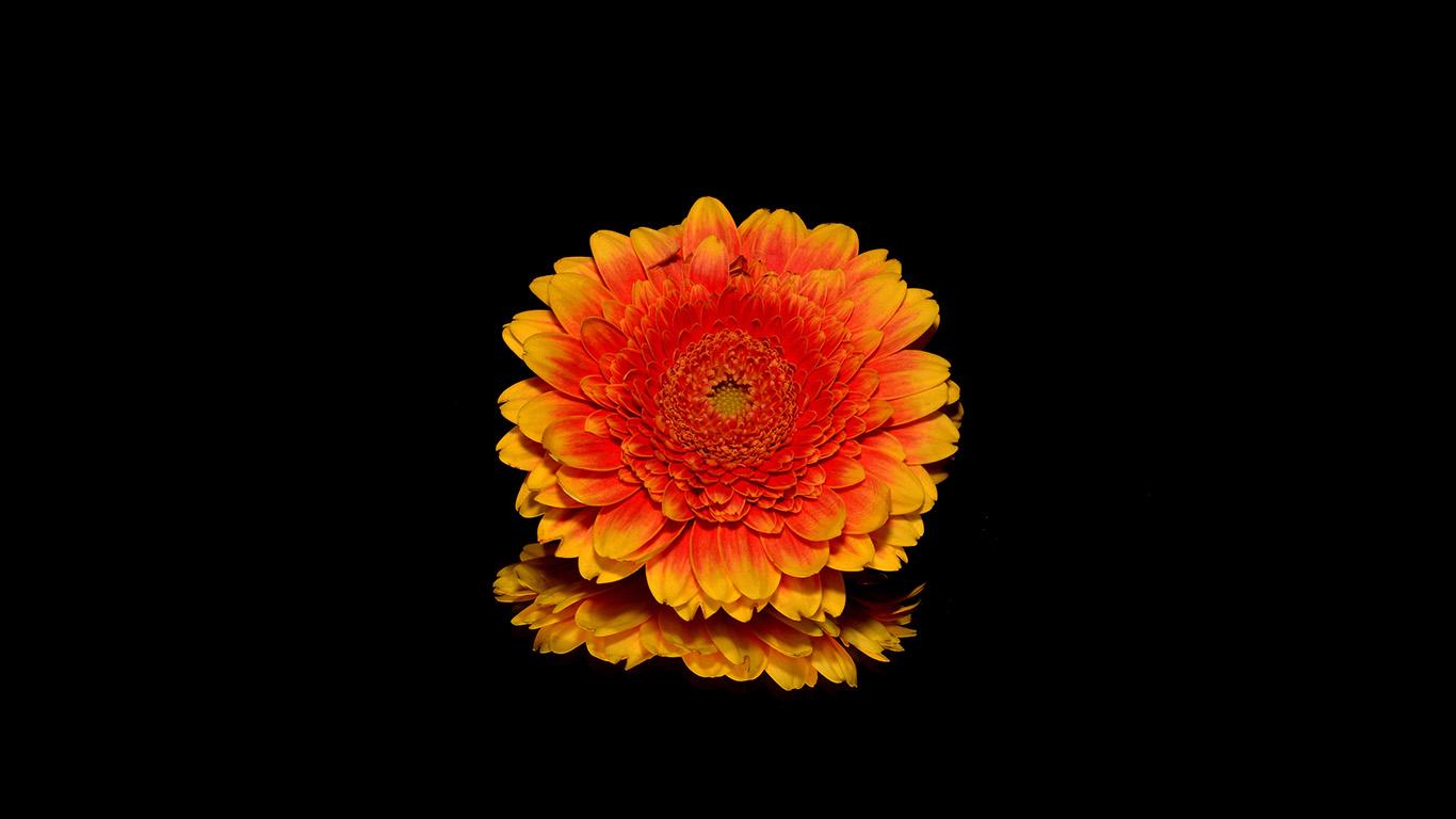Wallpaper For Desktop Laptop Nd66 Flower Red Dark