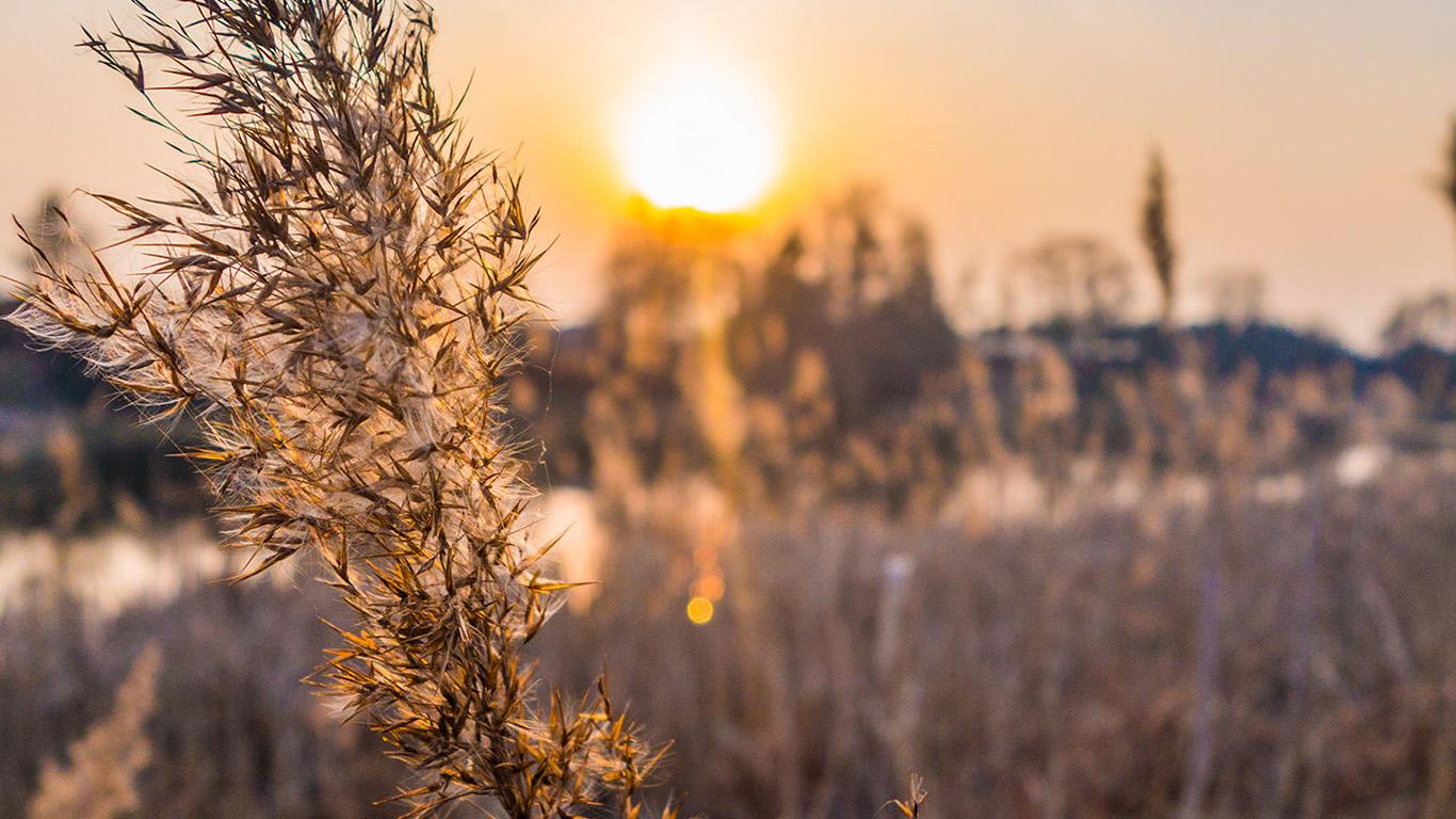 desktop-wallpaper-laptop-mac-macbook-air-nd67-fall-weather-flower-nature-sunset-wallpaper