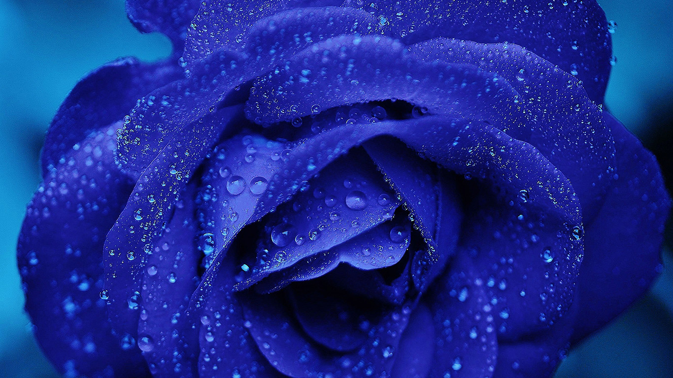 desktop-wallpaper-laptop-mac-macbook-air-nd81-rose-flower-blue-rain-bokeh-zoom-wallpaper