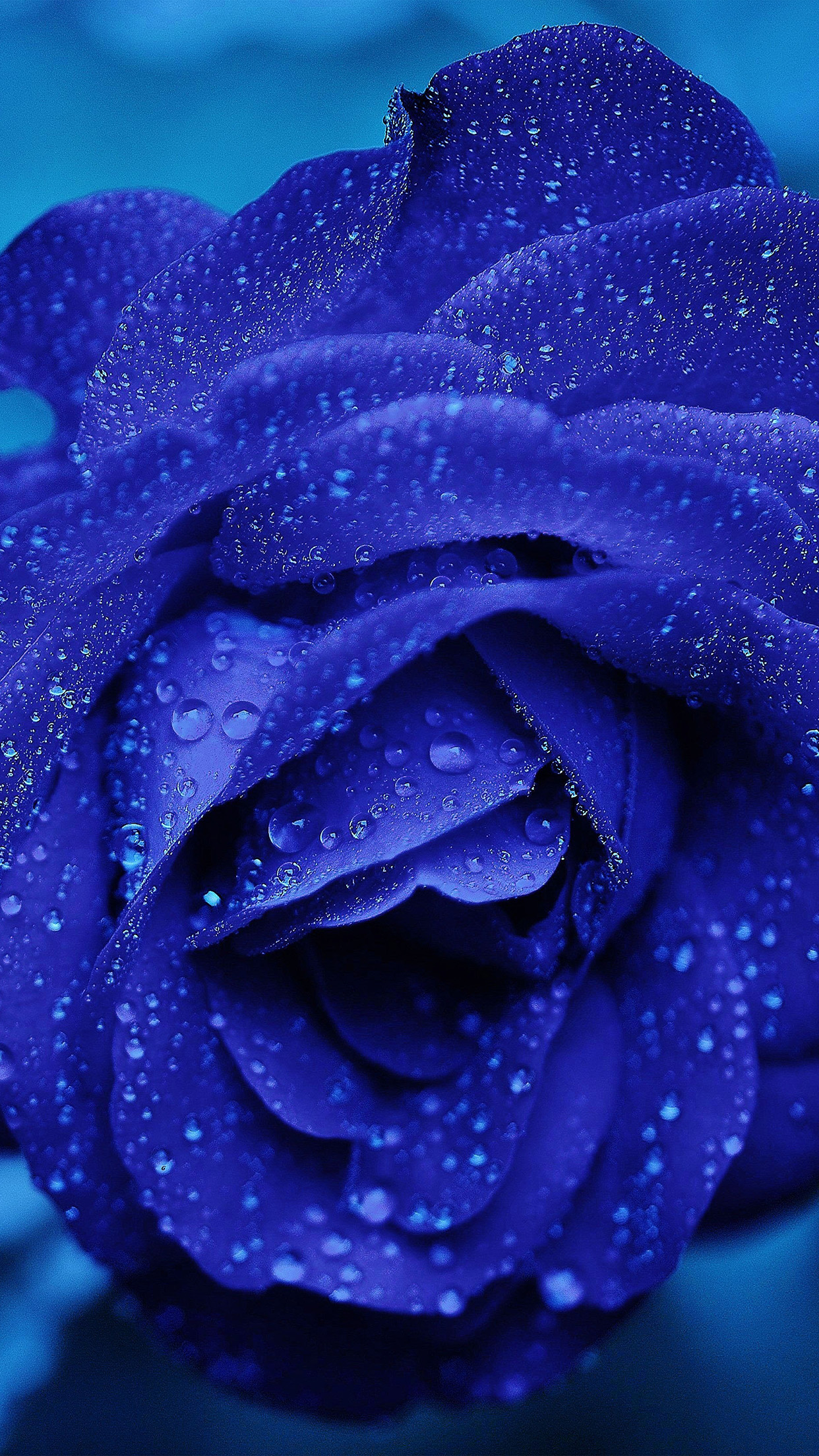 iphonepapers | iphone 8 wallpaper | nd81-rose-flower-blue-rain