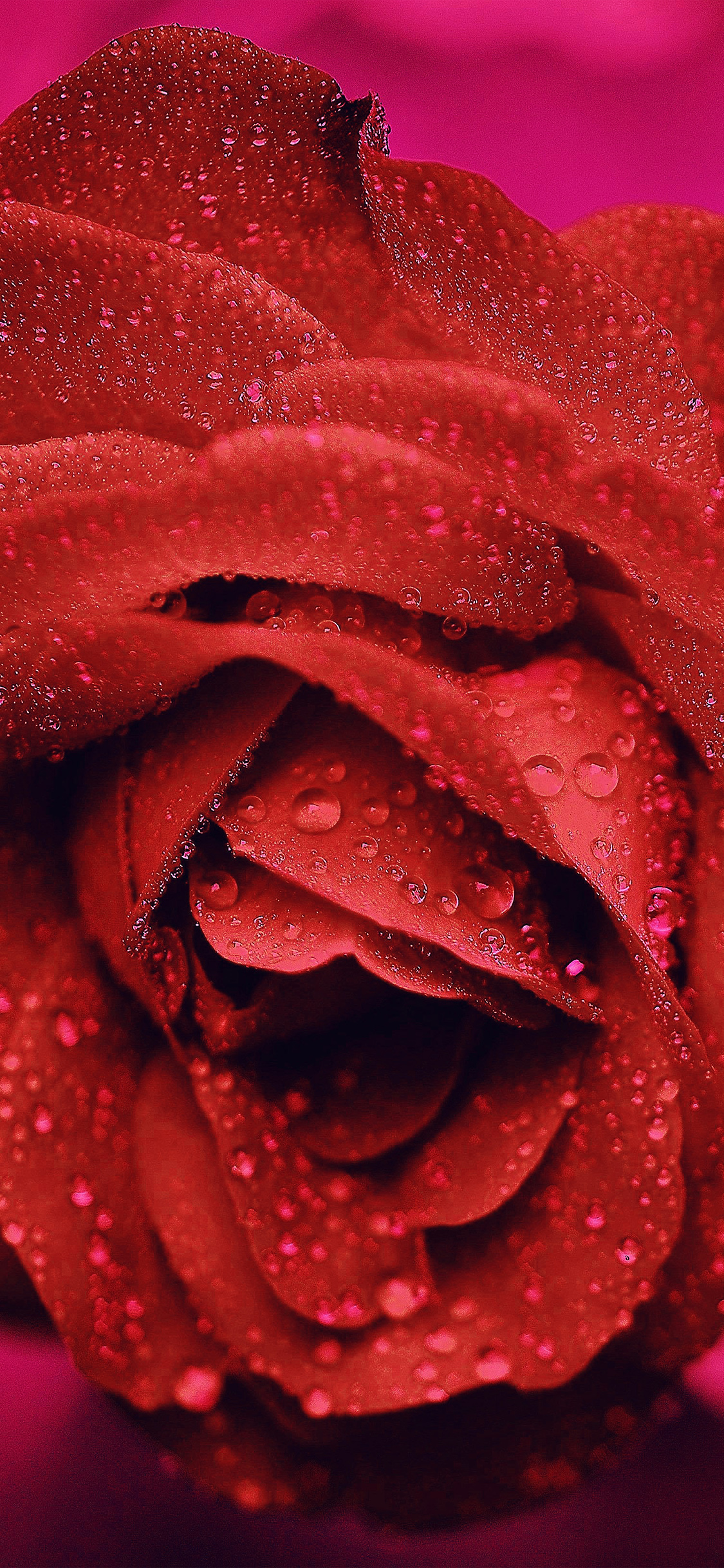 iPhoneXpapers.com-Apple-iPhone-wallpaper-nd82-rose-flower-red-rain-bokeh-zoom