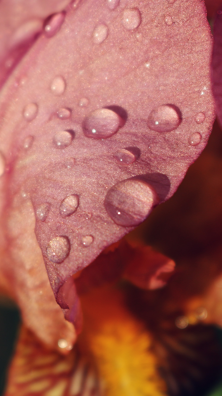 iPhone6papers.co-Apple-iPhone-6-iphone6-plus-wallpaper-nd97-red-flower-rain-bokeh-spring-nature