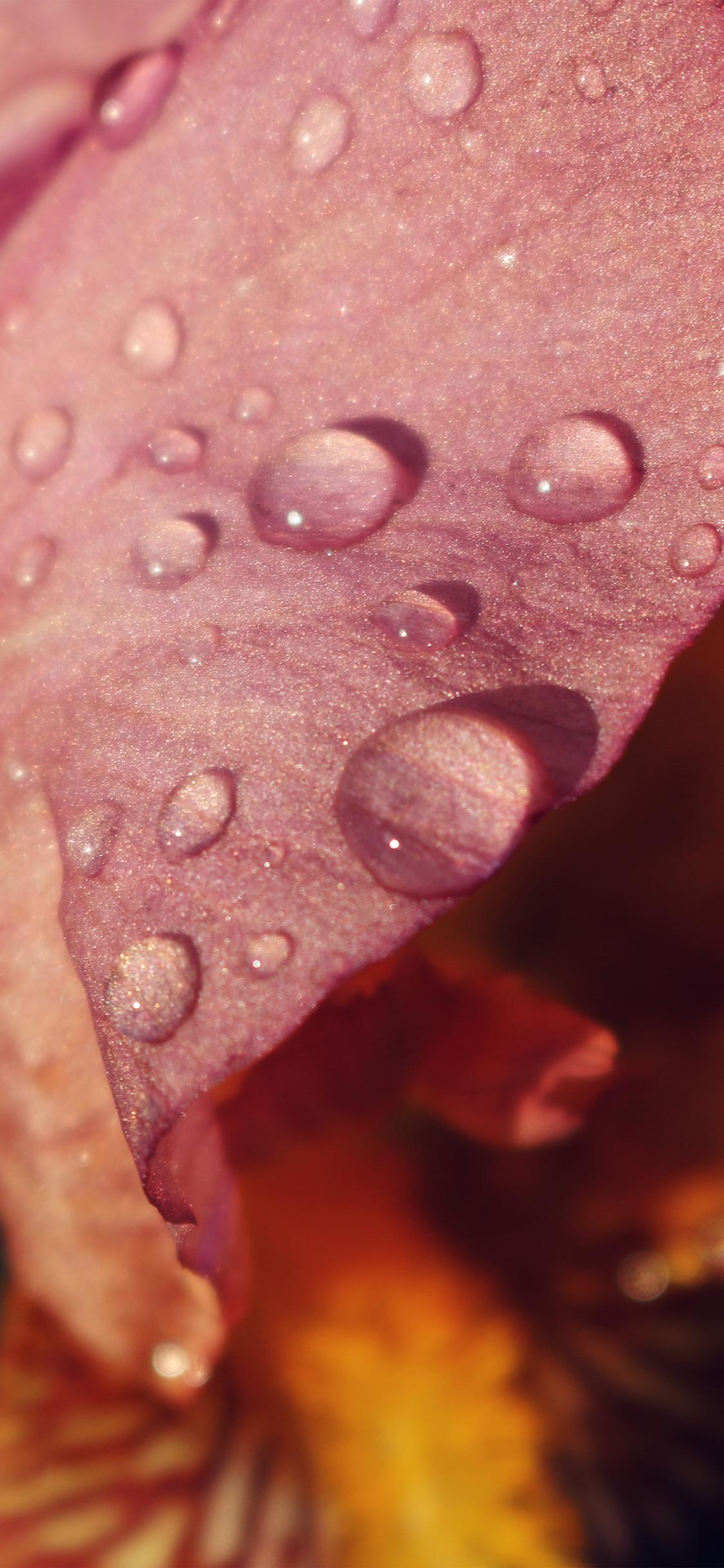 iPhoneXpapers.com-Apple-iPhone-wallpaper-nd97-red-flower-rain-bokeh-spring-nature