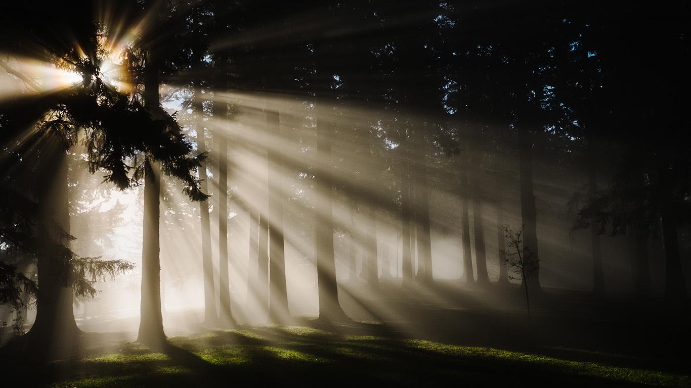 desktop-wallpaper-laptop-mac-macbook-air-ne00-light-in-wood-forest-nature-shine-wallpaper