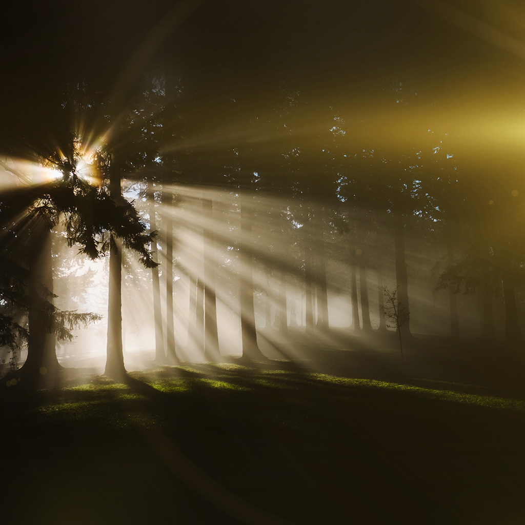 android-wallpaper-ne01-light-in-wood-forest-nature-shine-flare-wallpaper