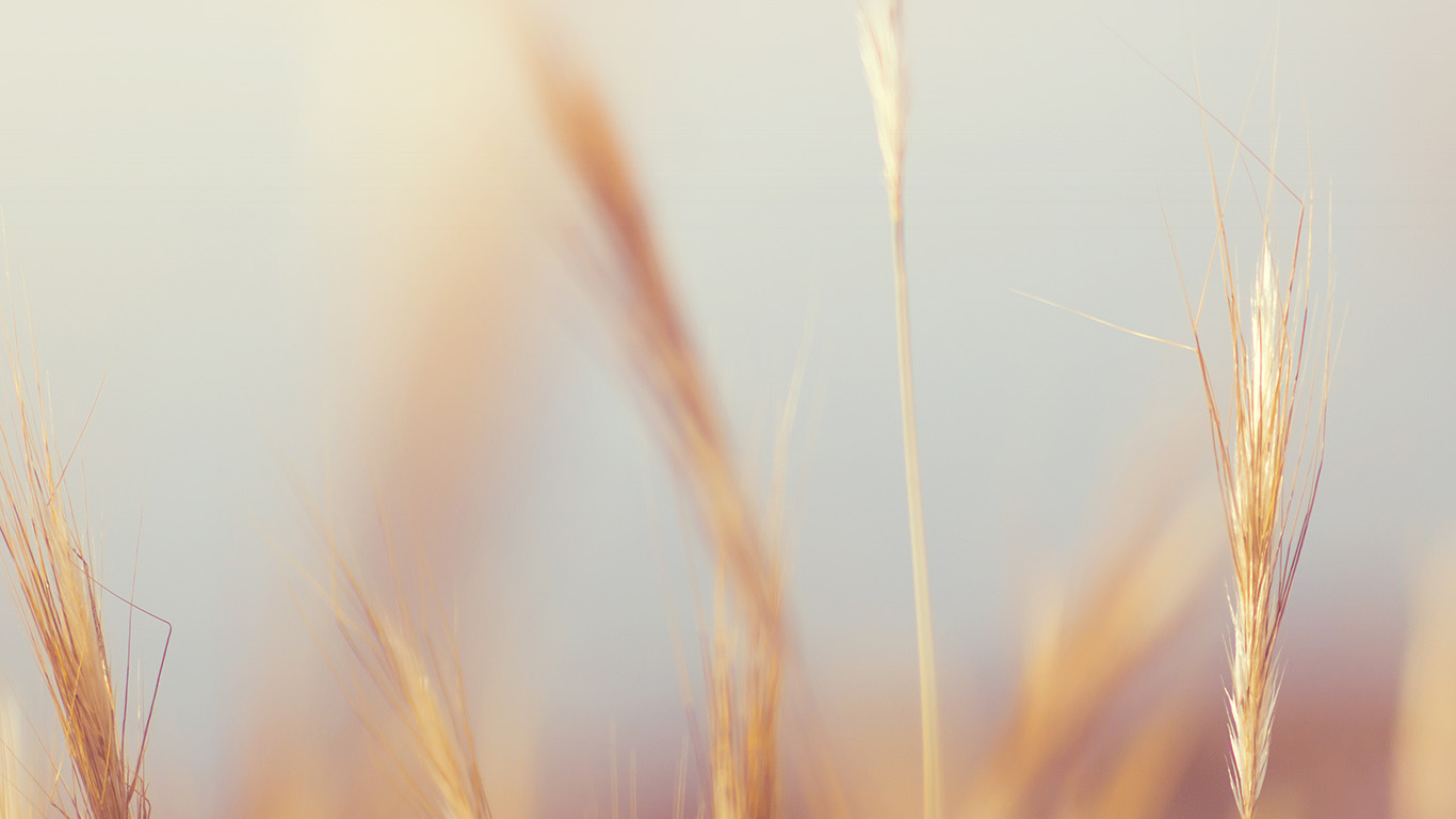 desktop-wallpaper-laptop-mac-macbook-air-ne07-rye-field-nature-bokeh-flower-wallpaper