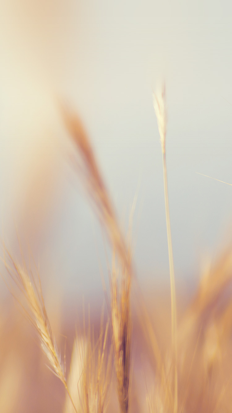 iPhone6papers.co-Apple-iPhone-6-iphone6-plus-wallpaper-ne07-rye-field-nature-bokeh-flower