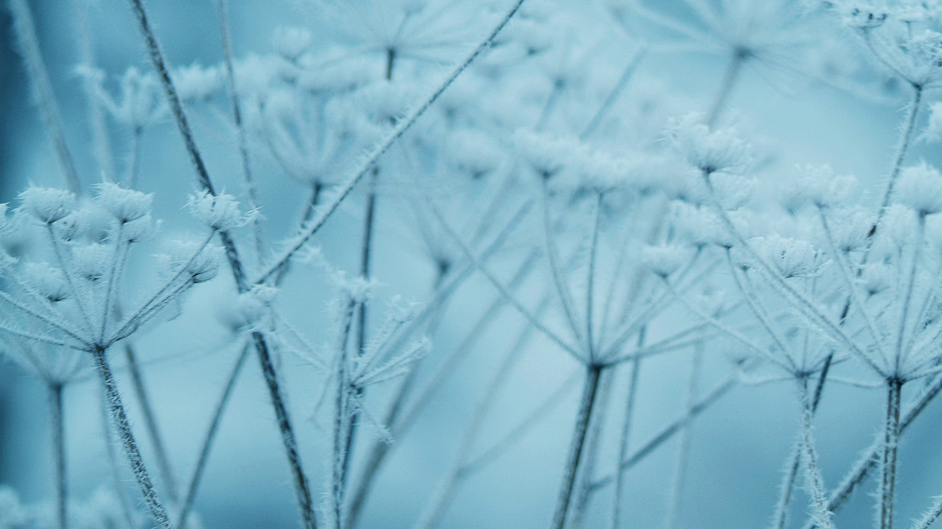 desktop-wallpaper-laptop-mac-macbook-air-ne20-ipad-snow-winter-flower-blue-nature-bokeh-wallpaper